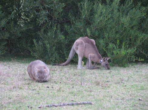 kangarooandwombat
