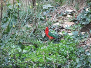 Not sure what kind of parrot this is, but there was a lot of very colourful, noisy bird life around.